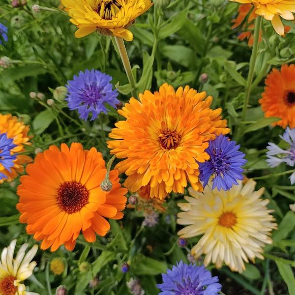 какие цветы посадить на балконе чтобы цвели все лето
