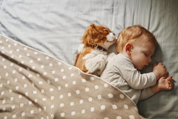 Фото №1 - Ребята и зверята: почему нельзя разрешать детям спать вместе с питомцем