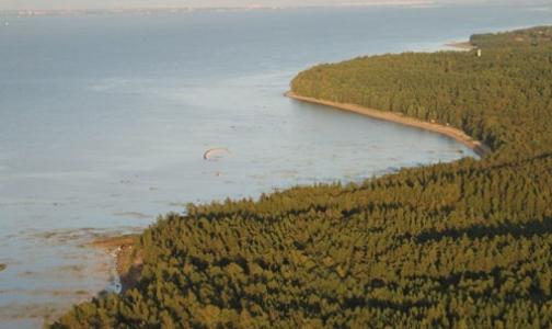 Фото №1 - У берега Финского залива плавает порох