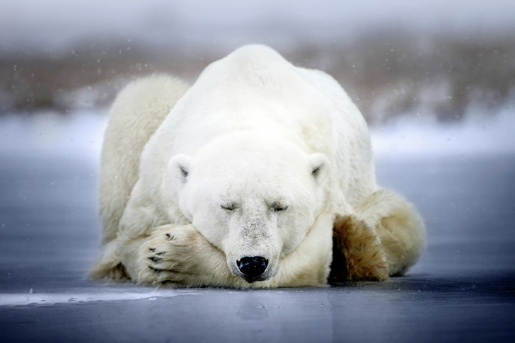 Фото №1 - Зоология: сонный сезон