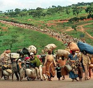Фото №1 - Африканские беженцы уничтожают природу