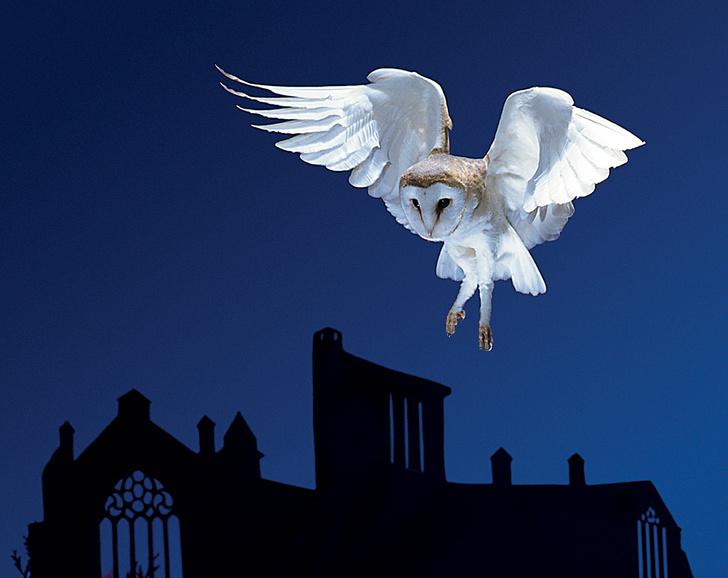 Фото №3 - На крыльях ночи