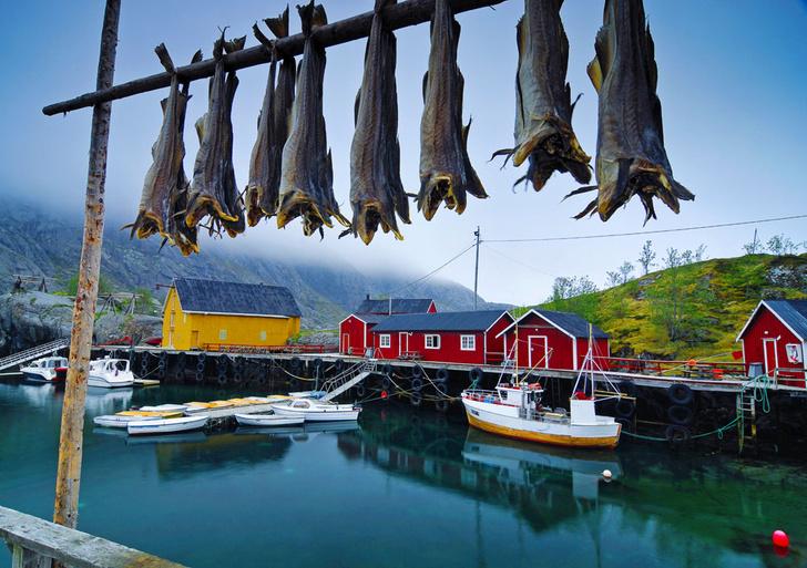 Фото №1 - Норвегия: рыбацкие сети
