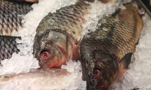 Фото №1 - В Петербурге проверили качество замороженной рыбы