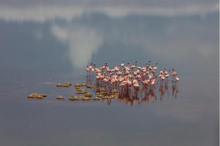 Фото №1 - Розовое облако