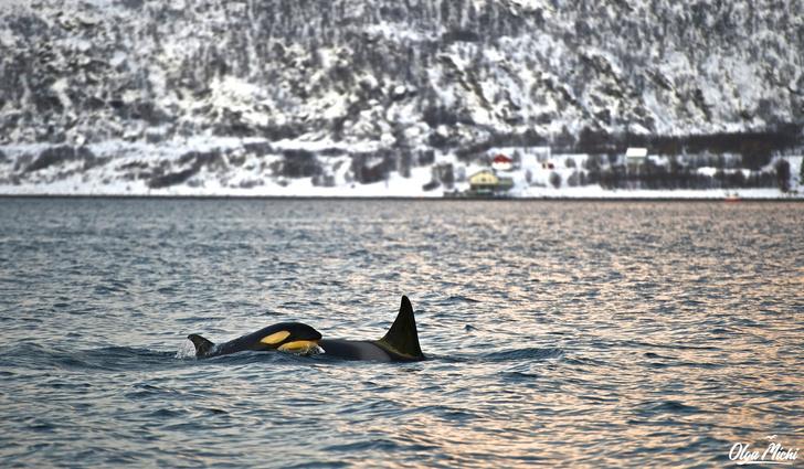 Фото №1 - Дивный север Норвегии