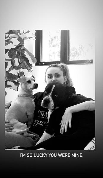 Фото №1 - «Mary Jane 5EVR»: Майли Сайрус посвятила песню своей умершей собаке 😢