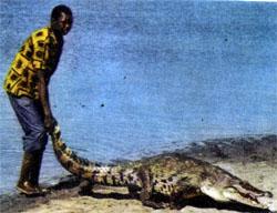Фото №3 - Божество по имени крокодил