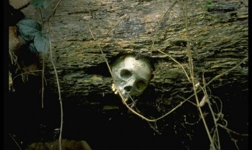 Фото №1 - Неандертальцы тоже страдали от рака, выяснили ученые
