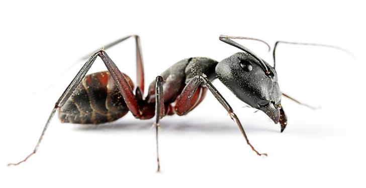 Фото №3 - Законы муравейника