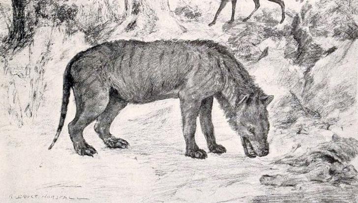 Фото №1 - Останки неизвестных хищников обнаружены в Египте