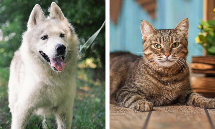Фото №1 - Котопёс недели: пес Шансон и кошка Чучундра