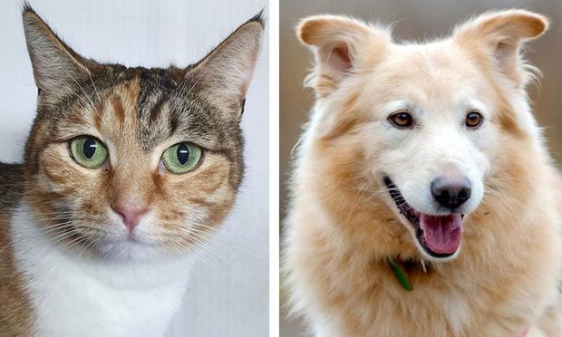 Фото №1 - Котопёс недели: кошка Маришка и пёс Трой