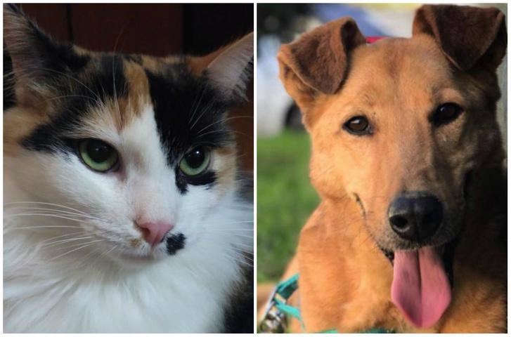 Фото №1 - Котопёс недели: кошка Монро и собака Симка