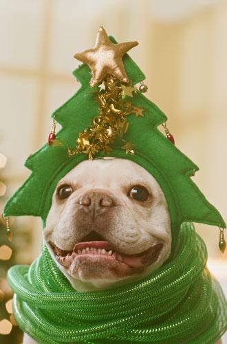 Фото №18 - Вырядился: забавные новогодние наряды домашних питомцев
