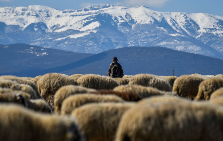 Фото №1 - Пастух