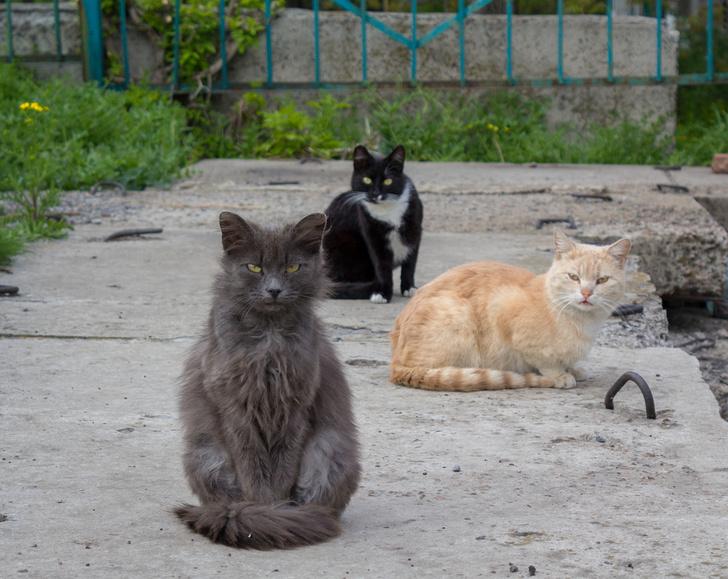 Фото №1 - Правительство Австралии объявило войну бездомным кошкам
