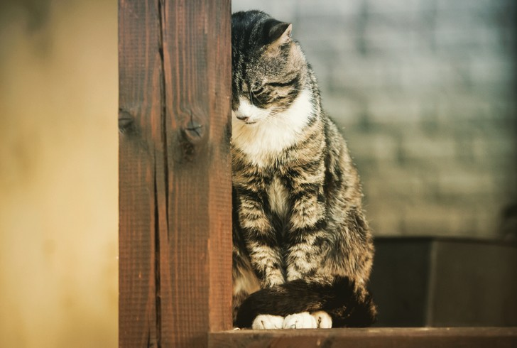 Фото №2 - Как забыть кота