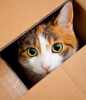Фото №1 - Почему кошки так любят коробки?