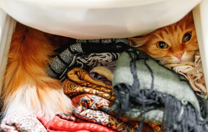Фото №1 - Почему кошки любят забираться в шкафы и ящики