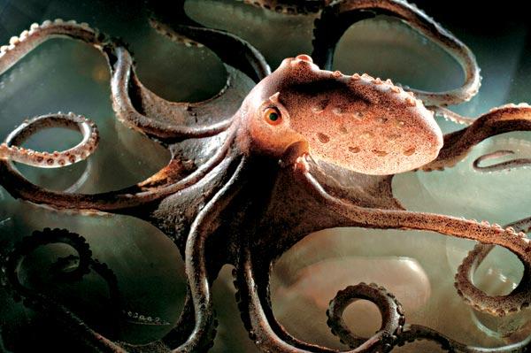 Фото №1 - Зоология как искусство