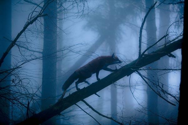 Фото №5 - Краски черного леса