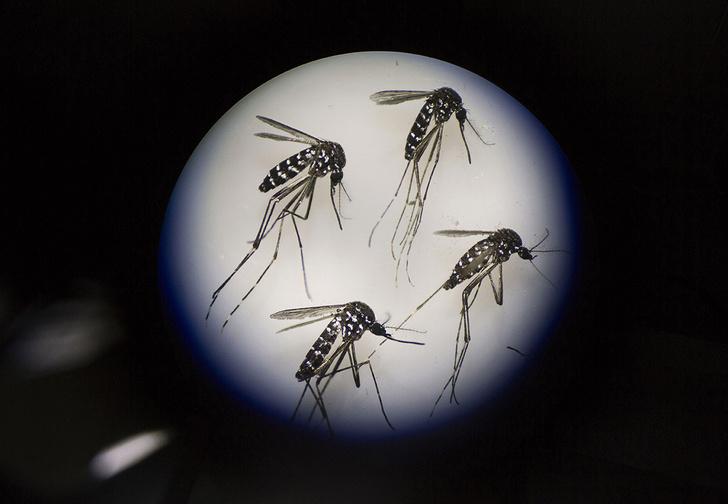 Фото №1 - Как подманить и уничтожить назойливого комара