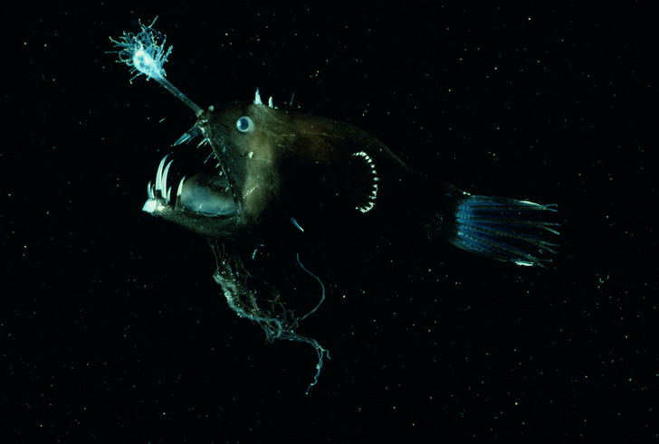 Фото №5 - Свечение моря: 5 примеров биолюминесценции в Мировом океане