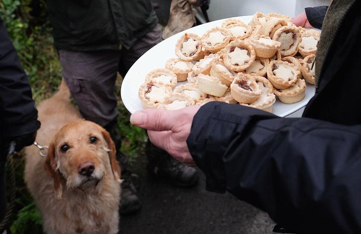 Фото №1 - Чем праздники опасны для собак