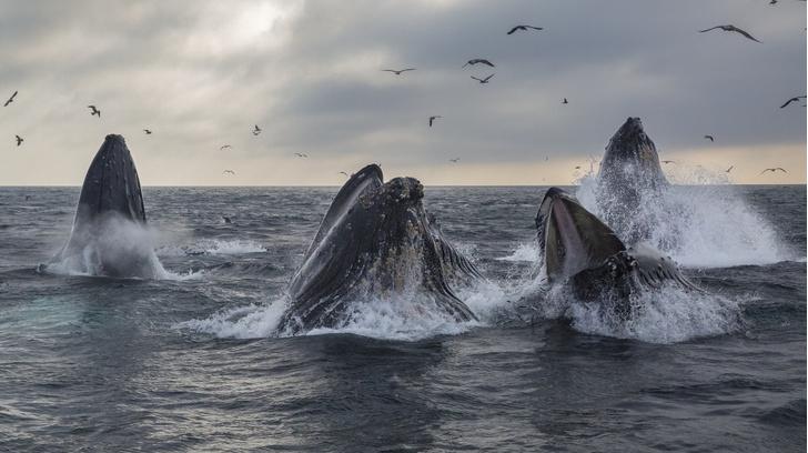 Фото №1 - День китов