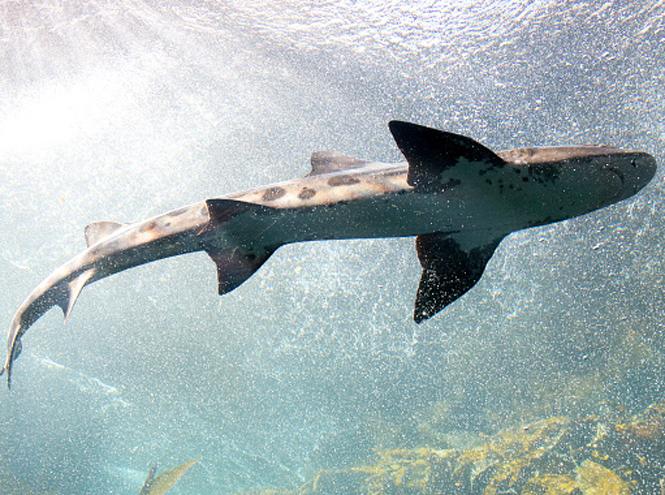 Фото №2 - На личном опыте: прыжок в бухту с акулами