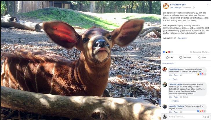 Фото №1 - Shake it off: Антилопа по имени Тейлор Свифт сбежала из зоопарка