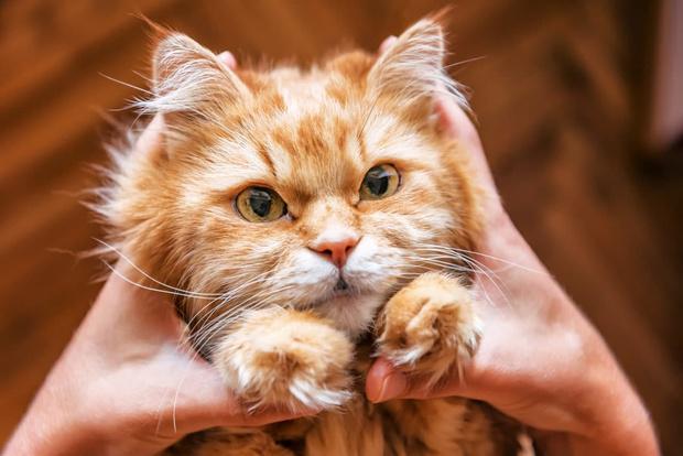 Фото №4 - Что делать, если у ребенка аллергия на кошку