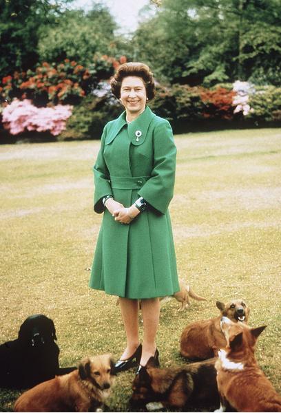 Фото №2 - Собаки ее величества: за что королева Елизавета любит корги