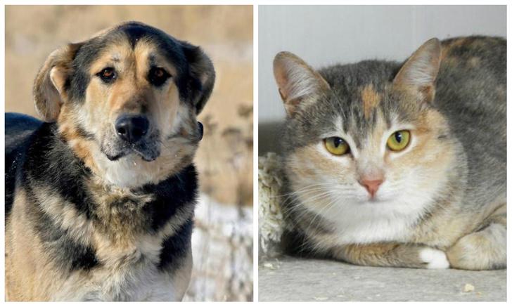 Фото №1 - Котопёс на карантине: пес Кинг и кошка Акварелька