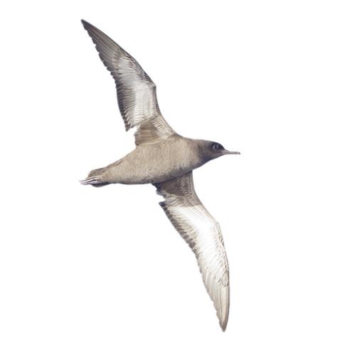 Фото №12 - Вольные мигранты: куда пропадают птицы зимой
