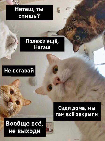 Фото №14 - 10 интернет-мемов, которые популярны только в России