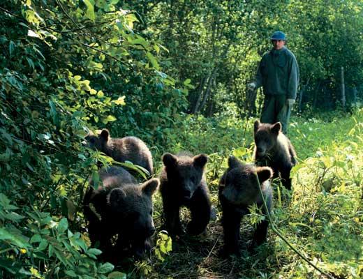 Фото №1 - Хозяин тверского леса