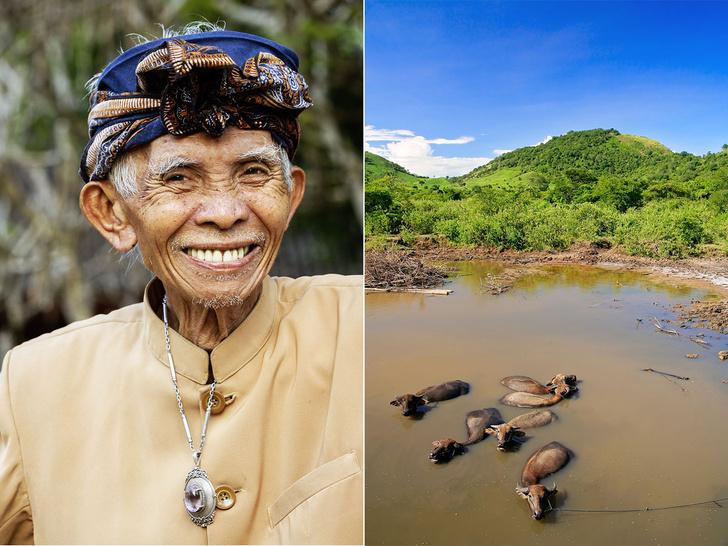 Фото №6 - Буйволы — хранители: как животные стали национальным достоянием Индонезии