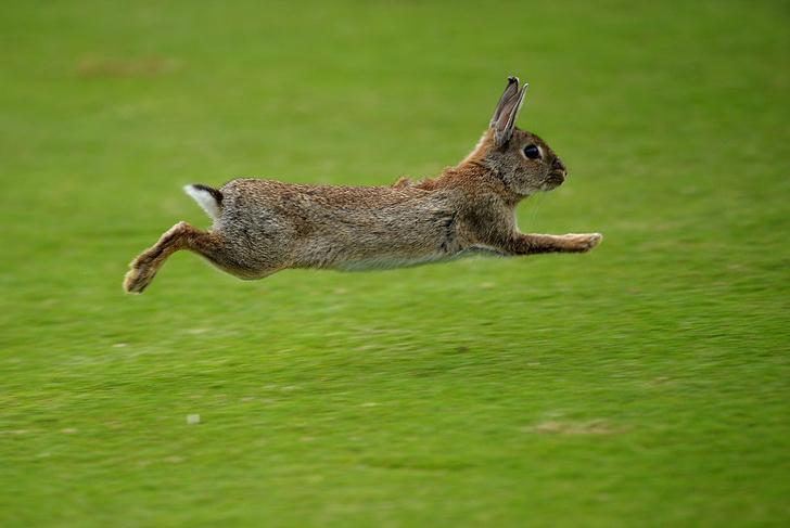 Фото №4 - Не только ценный мех: 11 удивительных фактов о кроликах
