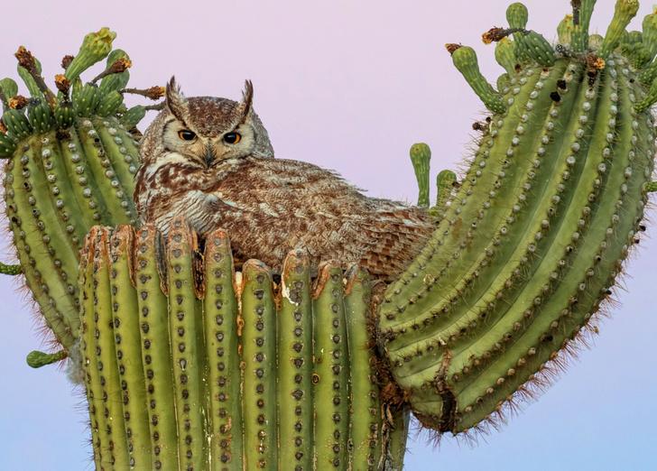 Фото №1 - Колючее гнездо