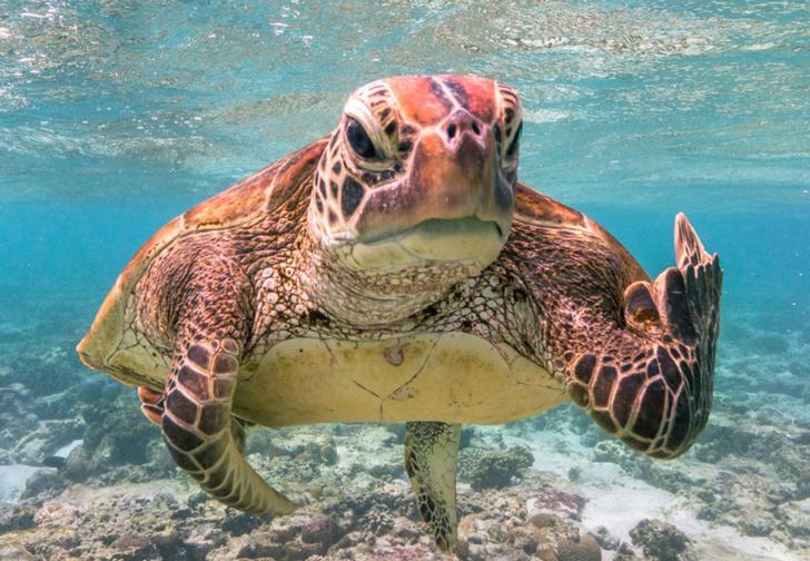 Фото №1 - 39 самых смешных фото ежегодного конкурса комедийных снимков дикой природы