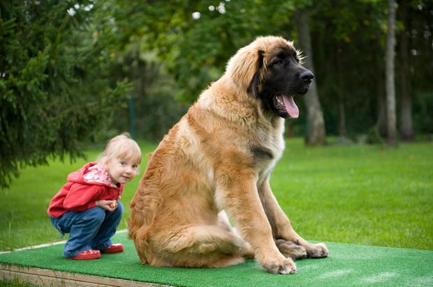 Фото №1 - 5 опасных заблуждений о дружбе ребенка и собаки
