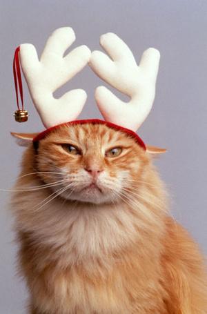 Фото №3 - Вырядился: забавные новогодние наряды домашних питомцев