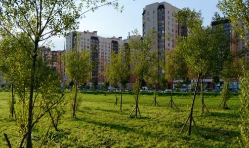 Фото №1 - В Петербурге госпитализировали рекордное число пациентов с клещевым энцефалитом