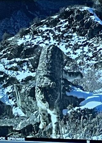 Фото №6 - Снежные барсы, Марс и волшебное озеро: 6 чудес Горного Алтая, которые должен увидеть каждый