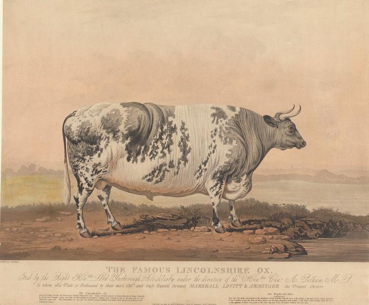 Фото №2 - Почему в XIX веке фермеры заказывали парадные портреты своих толстых коров, свиней и овец