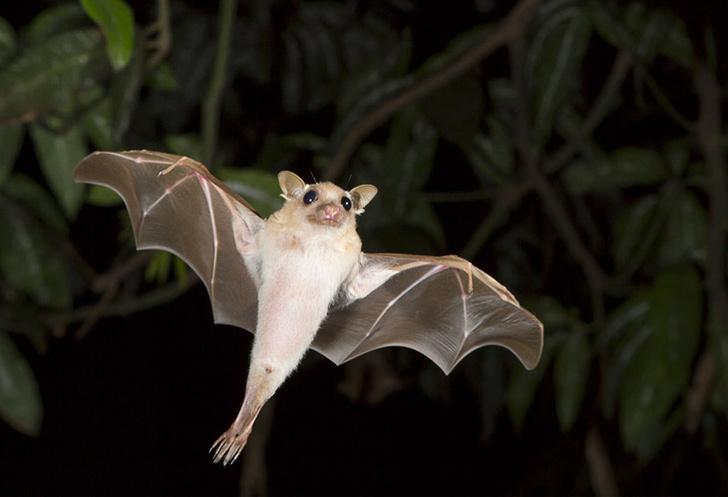 Фото №1 - Летучие мыши способны понимать эмоции своих собратьев