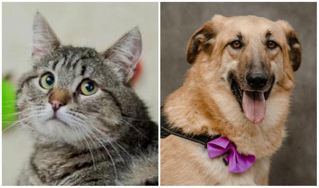 Фото №1 - Котопёс недели: кот Матвей и пес Джампер