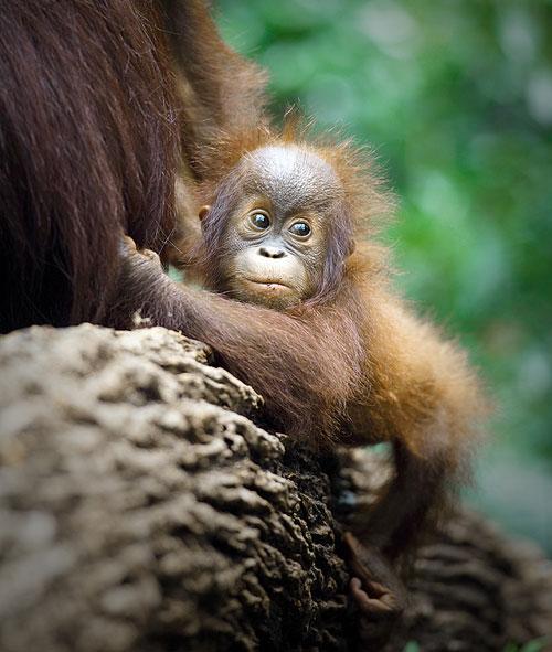 Фото №1 - Как новое поколение диких животных понимает, что человек опасен?